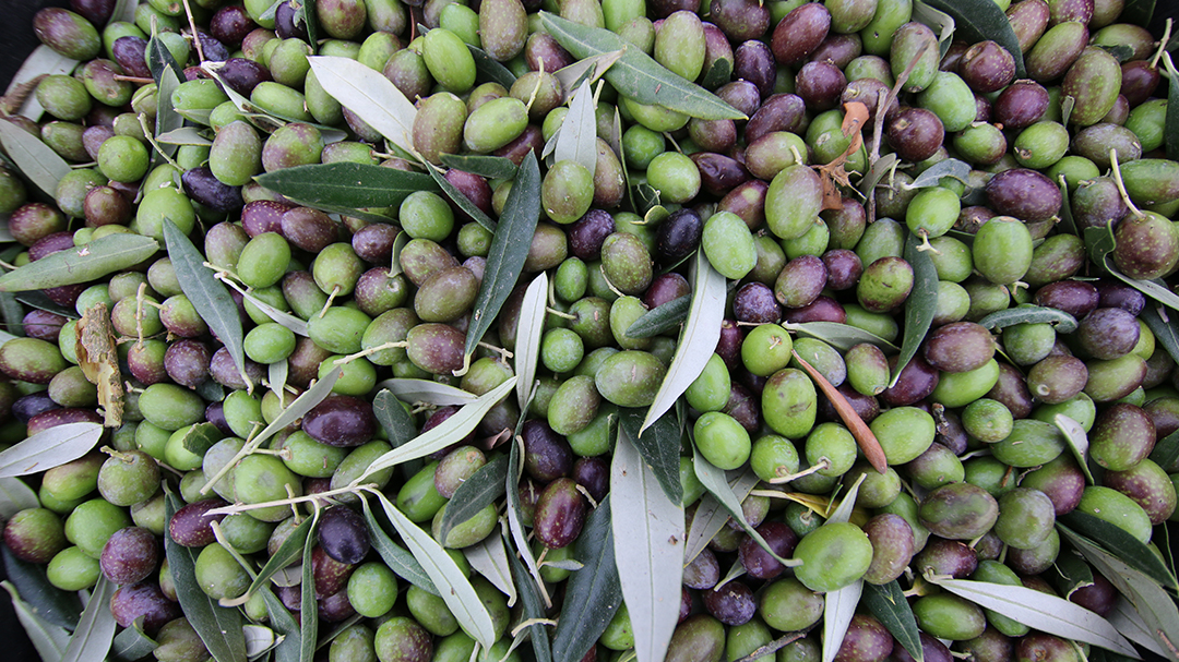 Apresentação do Azeite da Quinta da Fonte do Milho